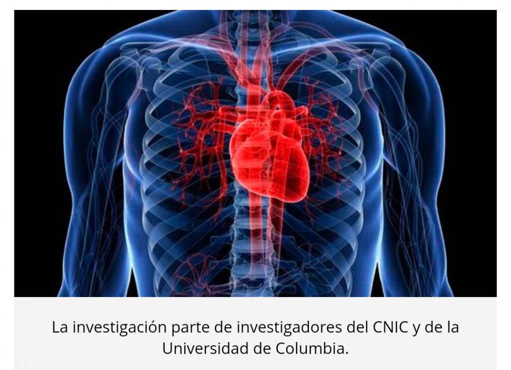 Descubren un \'muelle molecular\' esencial para la función del corazón ...